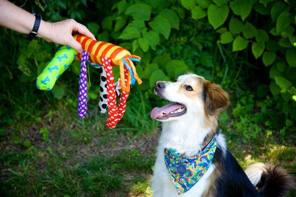 dog trainer in Metuchen, NJ