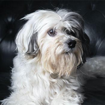 shaggy dog in Metuchen, NJ
